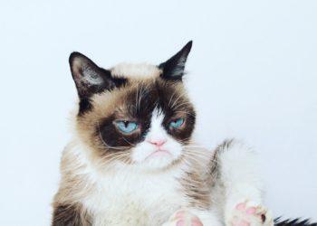 Фото из твиттера Grumpy Cat